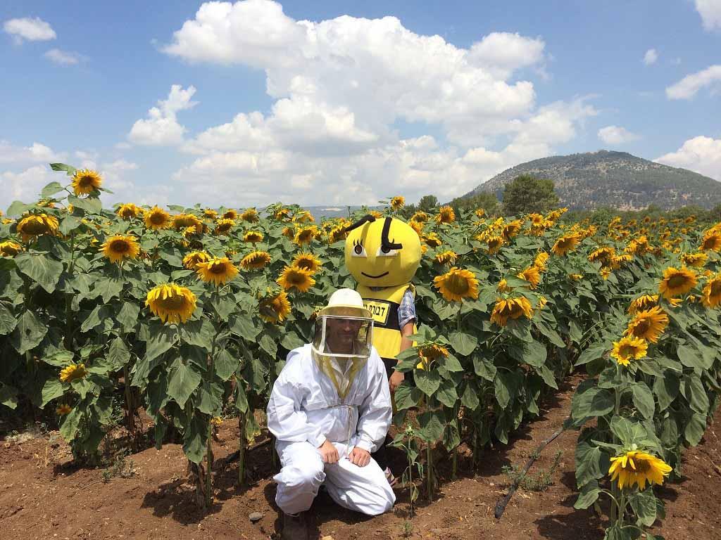 דבורת התבור