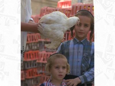 קמפיין מפתיע כנגד שימוש בתרנגולות במנהג הכפרות