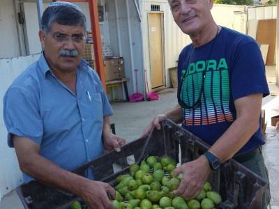 עפולה: עמותת פת בתיה חילקה מאות סלי מזון לנזקקים