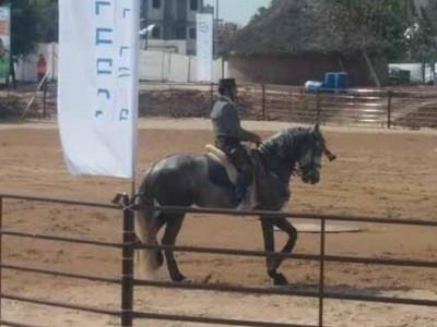 הסוסים חזרו לעפולה