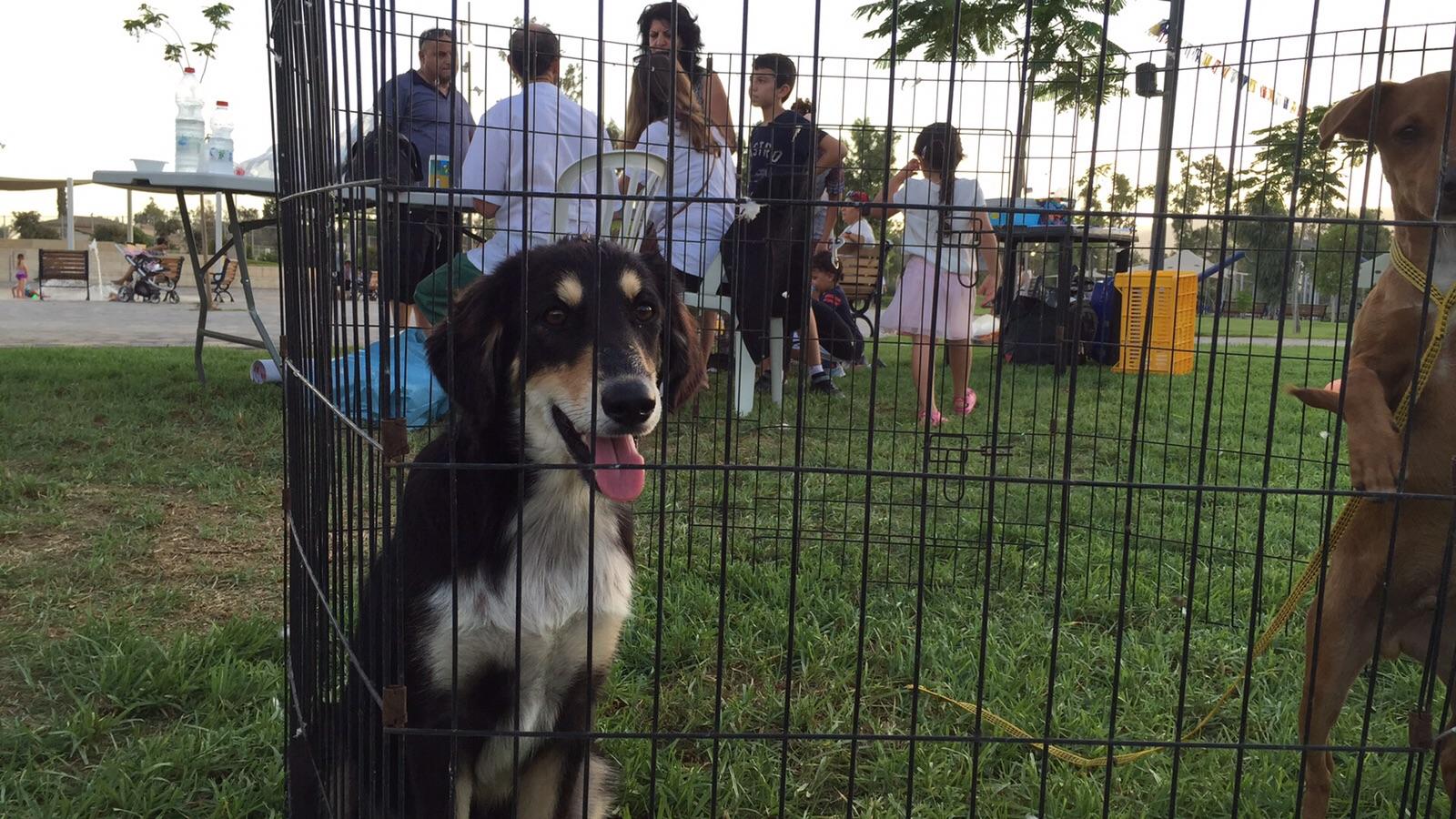 כלב מהכלבייה העירונית  מועמד לאימוץ