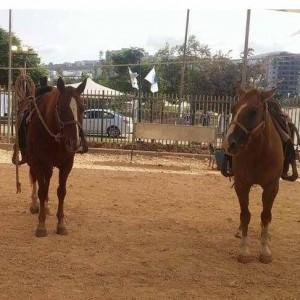 פסטיבל סוסים בעפולה