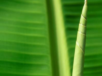 בננה ועמק – סיפור אהבה דרך הסטילס