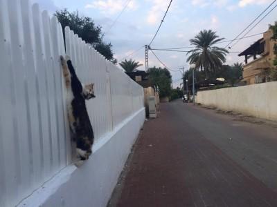 """צפו: """"מלאך"""" החיות חילץ חתול שנלכד בגדר בבית שאן"""