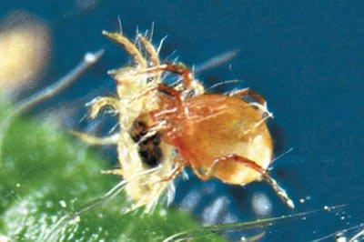 עמק המעיינות: עכבישים שווים זהב