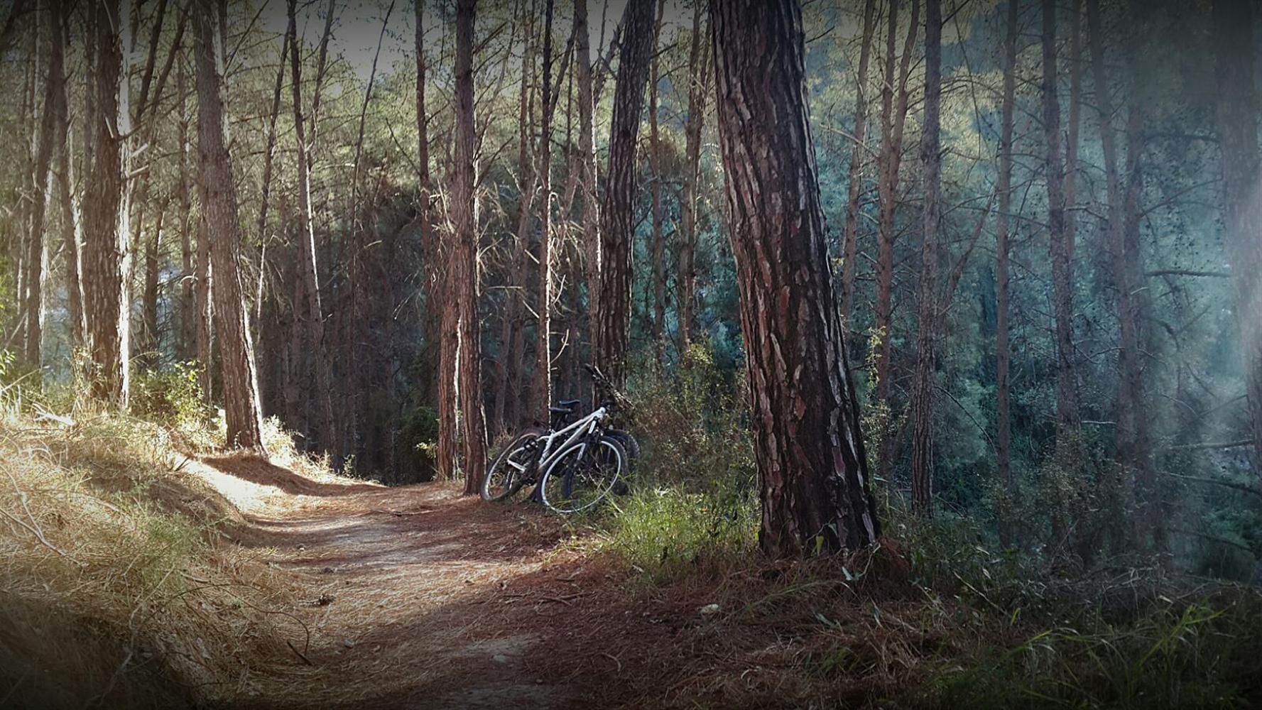 """שביל האופניים ביערות רמות מנשה. באדיבות אתר קק""""ל"""