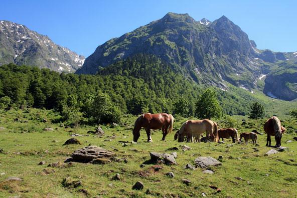 סוסים רועים על רקע הפסגות הדרמטיות של הפירנאים, אחד מאזורי הטבע היפים באירופה