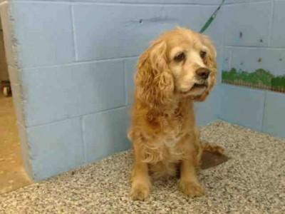 אימת הכלבת בעמק: כלב ביתי בגדעונה התגלה כנגוע במחלה המסוכנת