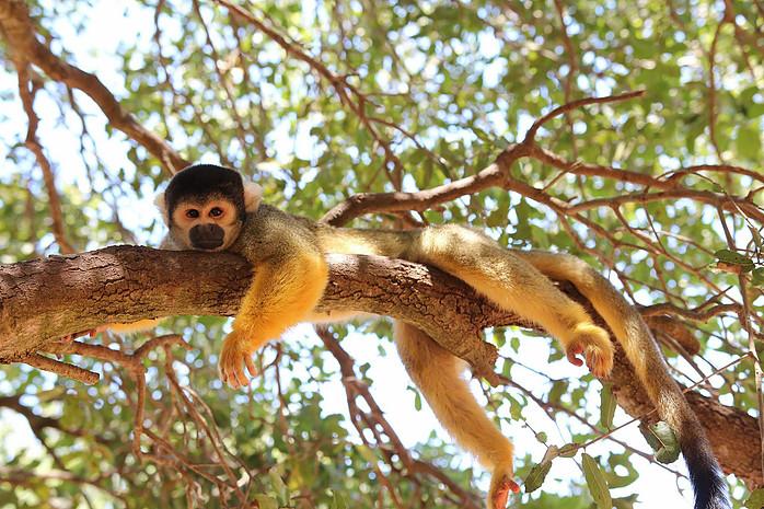 יער הקופים ביודפת באדיבות אתר יער הקופים