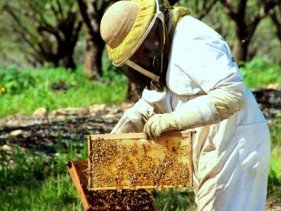הטרור החקלאי מכה שוב: כוורות דבורים הושחתו רגע לפני ראש השנה