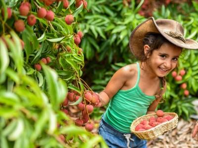 """מומלץ לחופש הגדול: """"להתאהב בטבע"""" בפסטיבל הליצ'י יולי-אוגוסט"""