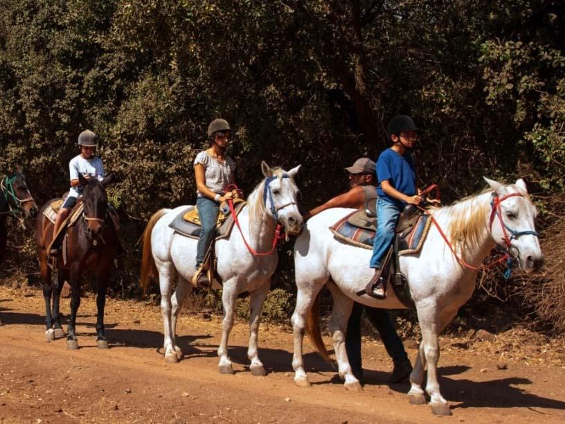 טיולי סוסים במרום גולן. צילום אילן הדר