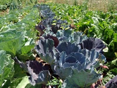 גינת ירק ביתית בחורף: כך תעשו את זה נכון