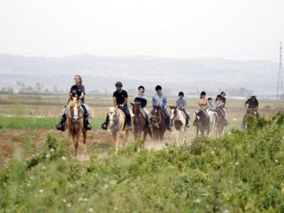"""""""חוות גזית"""": כי לא מחליפים סוס מנצח"""