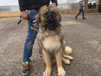 די למוקשים: בעפולה יוצאים למבצע נגד צואת כלבים