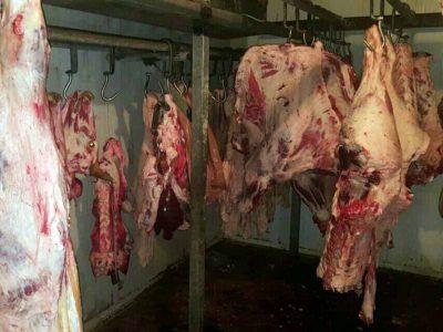 זהירות: בשר בשחיטה שחורה ללא פיקוח
