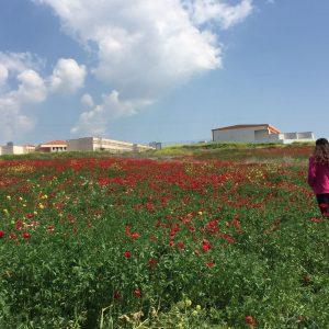 מרבדי פריחה ליד הכפר נין