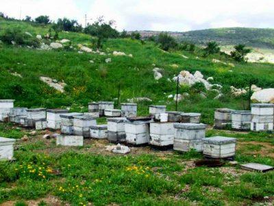 תושב האזור חשוד בגניבת 18 חלות דבש