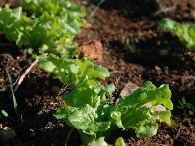 החורף והגשם עדיין כאן: מה לשתול בגינה?