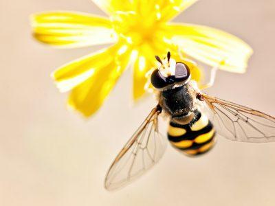 על הדבש ועל העוקץ: דבורי הדבש ממשיכות להפתיע