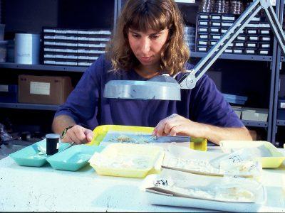 אורנים: מחקר חדש מצביע על העדות הקדומה ביותר לדיג בכנרת לפני כ-23,000 שנים