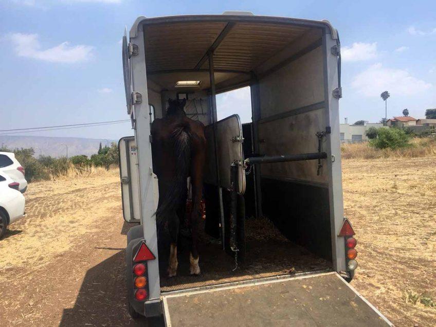 מפקחי משרד החקלאות פינו מקיבוץ באזור סוסות במצב קשה