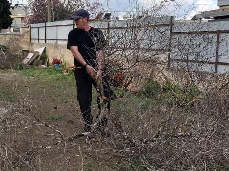השוטרים ניקשו וגזמו את העצים לקראת הכנת גינה פורחת