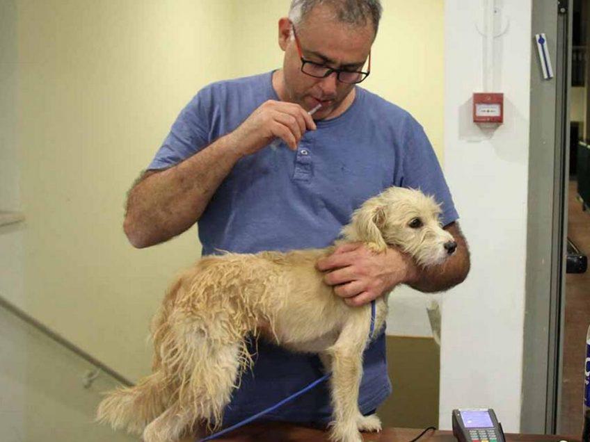 """מוא""""ז הגלבוע מובילה למבצע לעיקור כלבים בבעלות"""