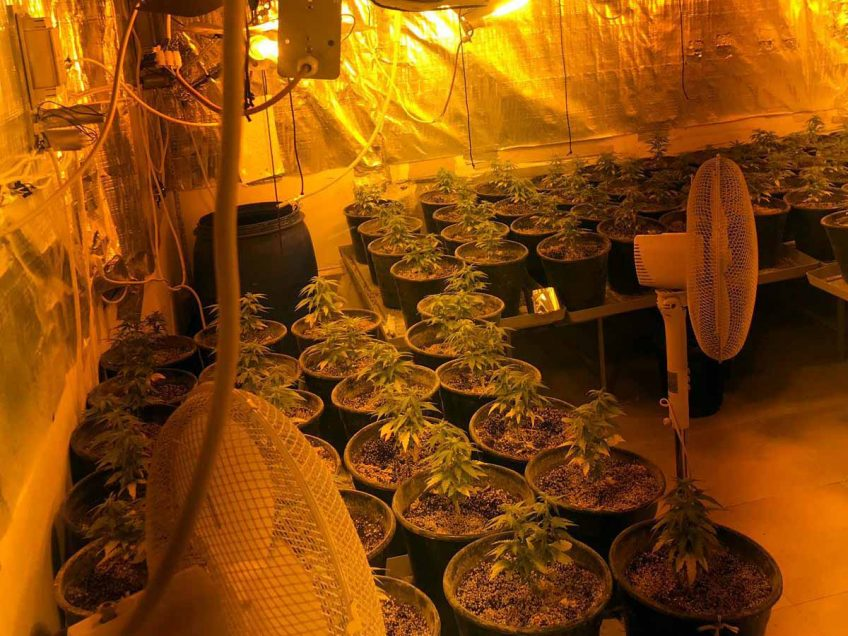 נוף משכר: מעבדה לגידול סמים בתוך דירה בנוף הגליל