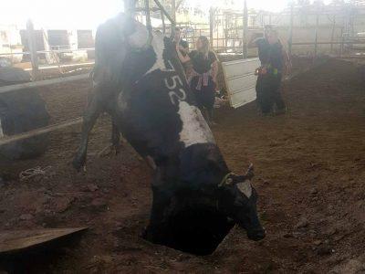 """נהלל: לוחמי כב""""ה חילצו פרה שנפלה לבור שפכים ברפת"""