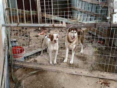 מרתיח! צעיר מריינה החזיק 14 כלבים בתת תנאים