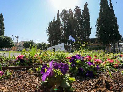 מכניסים צבע בעפולה: 15,000 פרחים נשתלו בשדרות ארלוזורוב