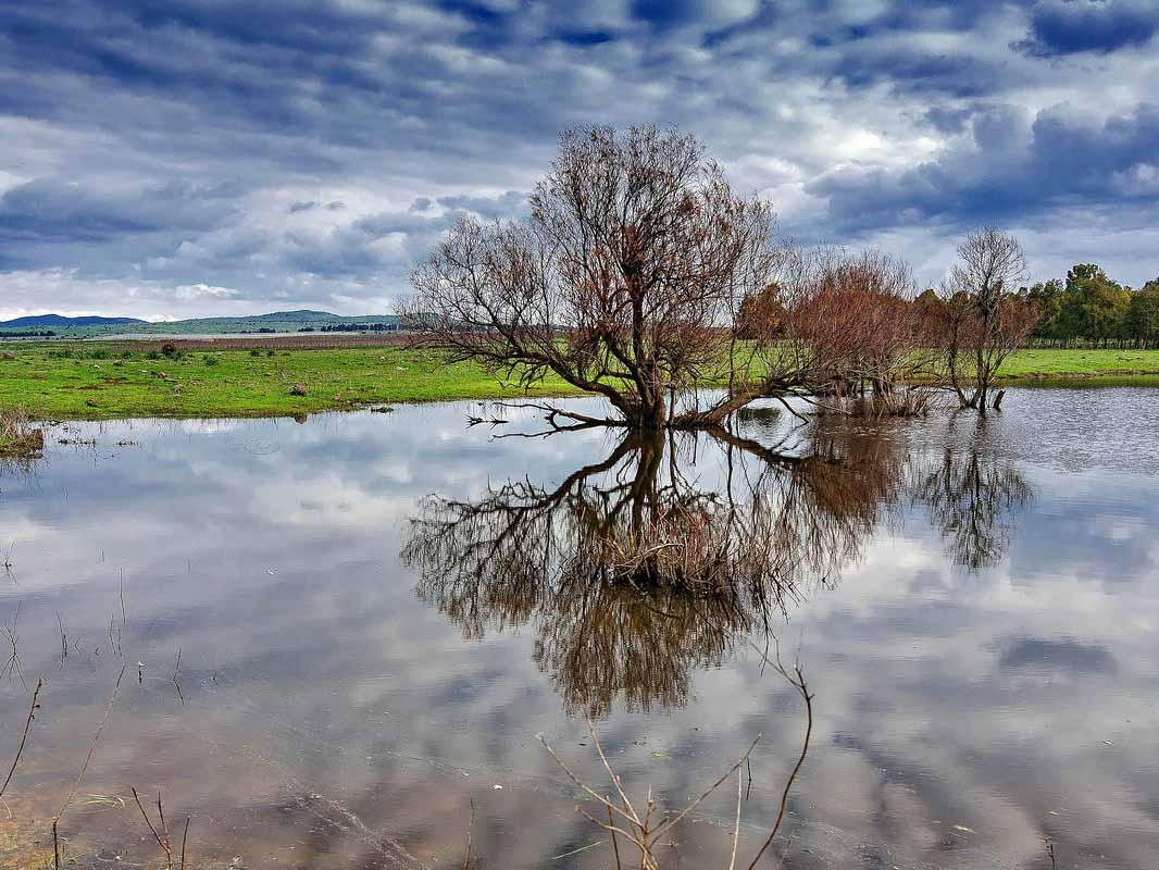 צילום בטבע- צילום: אבי רוטשטיין