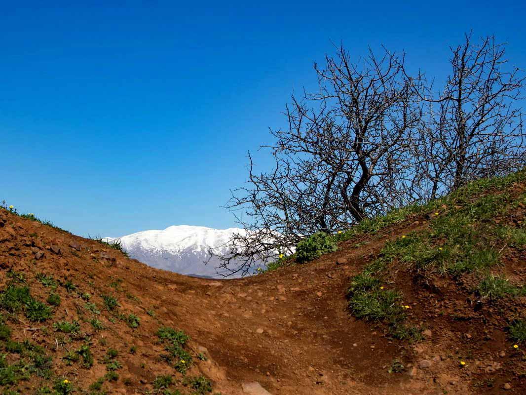 צילום בטבע- צילום: איריס לביא
