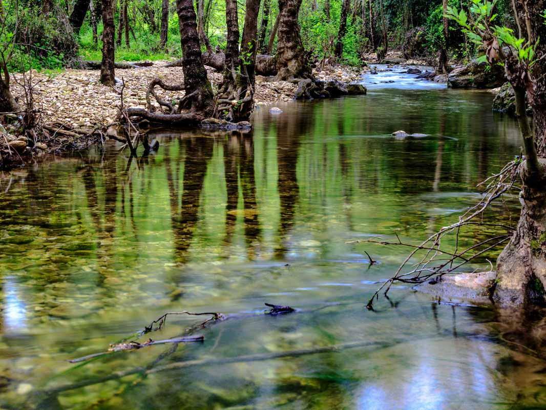 צילום בטבע- צילום: טומי זינגר