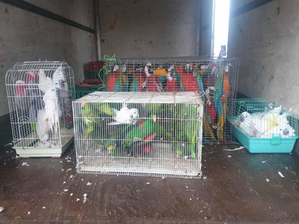 ציפורי המחמד שנגנבו במשאית הפורצים. צילום: דוברות המשטרה
