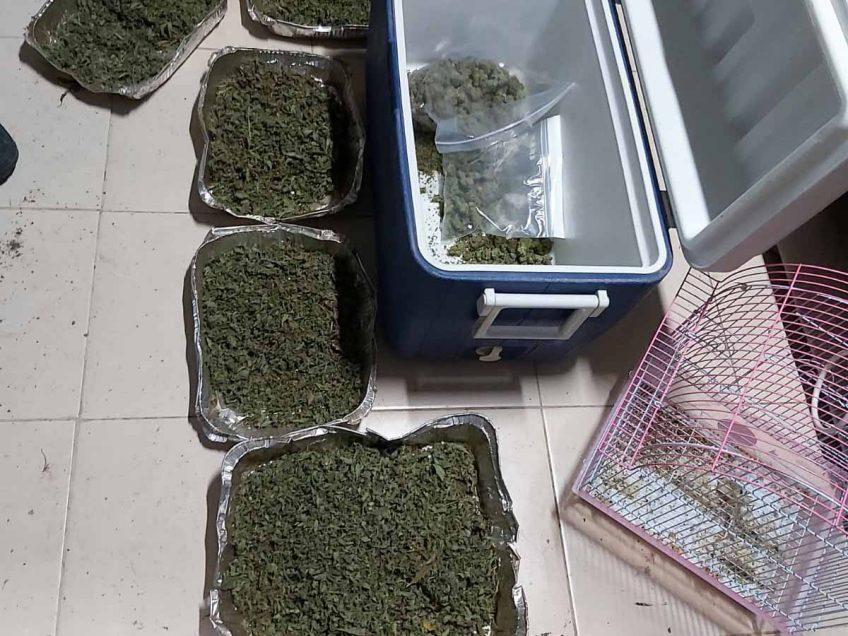 מעבדה ענקית לגידול והפקת סמים נחשפה באזור בית שאן