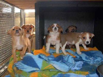 מכשכשים בזנבם: הפנינג אימוץ כלבים בפארק העירוני בעפולה