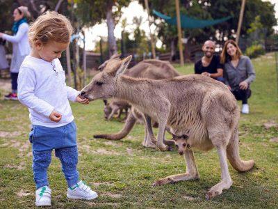 אחרי הסגר: סתיו בגן גורו עם בעלי חיים אוסטרליים חדשים