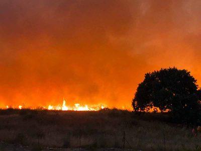 כואב הלב! שריפה כילתה 480 דונם של יער יפיפה