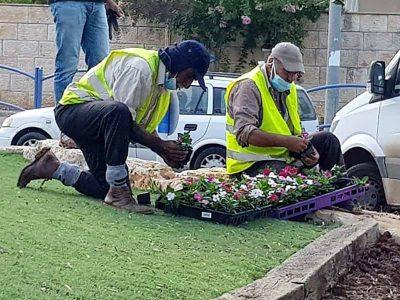עפולה: עוטפים את העיר בפרחים