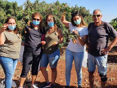 """""""מתוק"""": חקלאי פינק צוותים רפואיים בקטיף ליצ'י"""