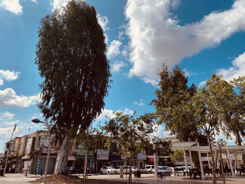 נתוני הקורונה חושפים: עפולה 'העיר הירוקה' ביותר בישראל