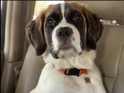 אל תשכחו אותי בקיץ: משרד החקלאות הגיש כתב אישום בגין השארת כלב ברכב