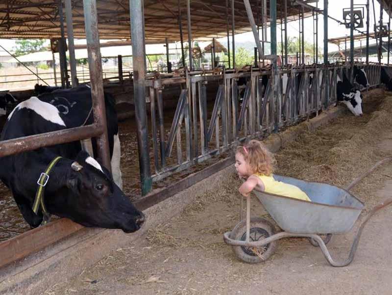 שביל פרות החלב  צילום: שביל פרות החלב בית לחם הגלילית