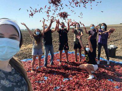 עפולה: חניכי תנועת הצופים התגייסו לעזור לחקלאים