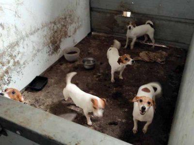 מזעזע: מפקחי משרד החקלאות חילצו כ-90 כלבים שהוחזקו בבית הרבעה פיראטי במושב בגלבוע