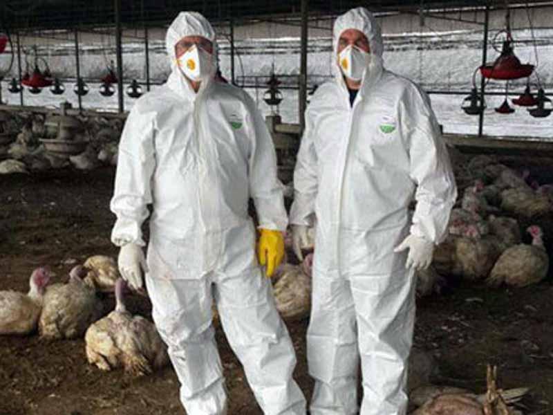 שפעת עופות התגלתה בלול רבייה במושב רם-און