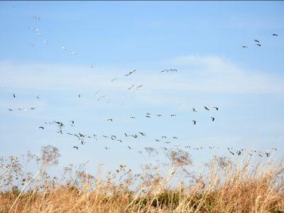 ציפורים נודדות ושדות שנצבעים בירוק: פארק המעיינות פתוח למבקרים