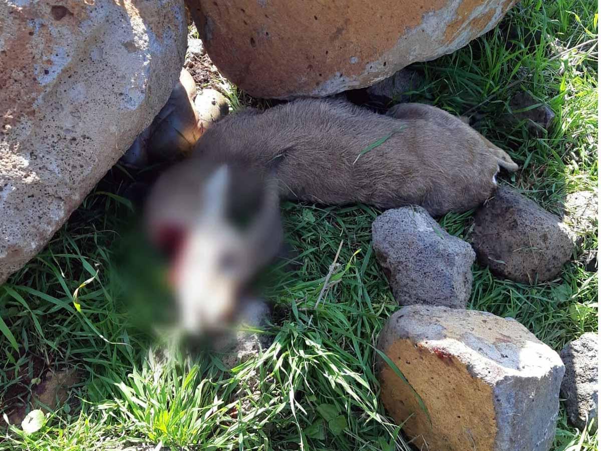 הצבי שנקטל בציד לא חוקי. צילום: רט״ג ומשטרת ישראל